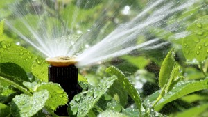 To avoid scorching foliage never use sprinklers in hot sun