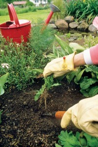 Hand-weeding is a practical way of removing weed