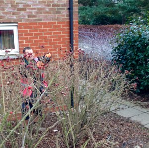 Students winter pruning