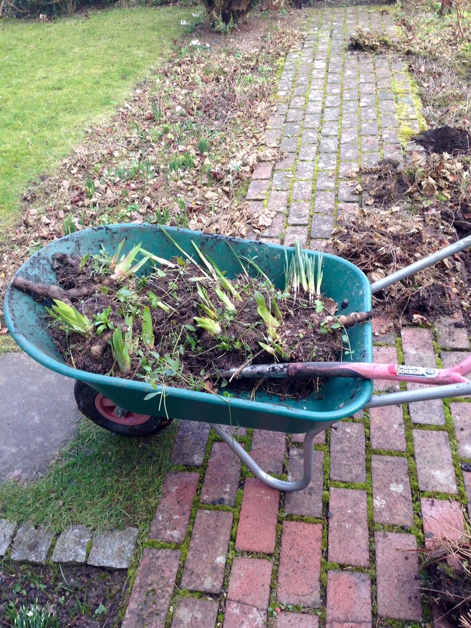 Changeable weather confusing plants - World Radio Gardening