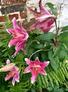 Grow lilies in pots and put them into beds and borders