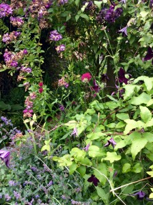 Mixed borders can give year round interest