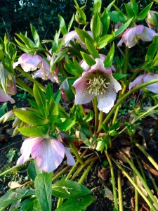 It may be possible to split and divide perennials
