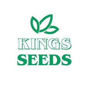 Kings seeds logo